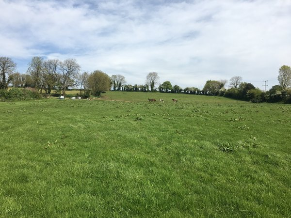 Leitrim, Kilworth, Co. Cork – Agricultural Land For Sale | 8.00 acres (3.24 hectares).
