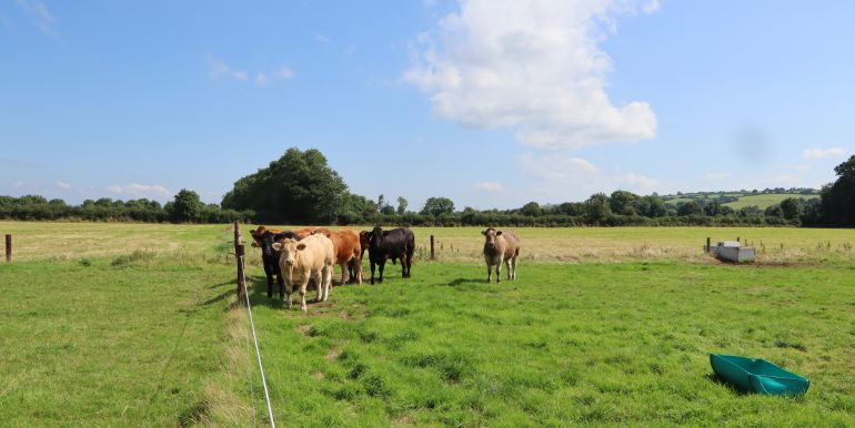 Greenhall Rathcormac, Cattle,